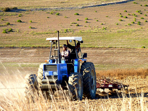 Farmworker behind the wheel of a tractor ploughing a field