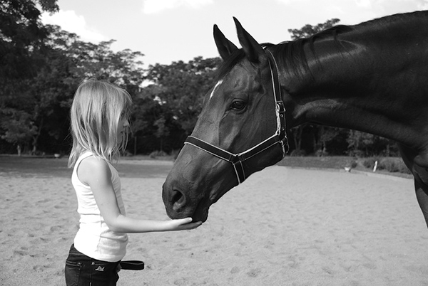 A young girl strokes her horses chin in the paddock.